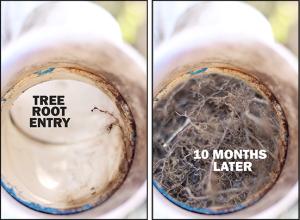 tree root blocked drain brisbane